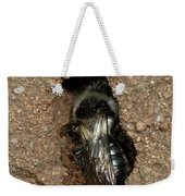 Solitary Bee  Andrena Cinearia Weekender Tote Bag