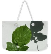 Sophisticated Shadows - Glossy Hazelnut Leaves On White Stucco - Vertical View Upwards Right Weekender Tote Bag