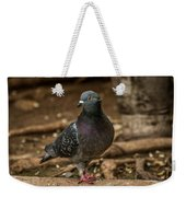 South American Pigeon  Weekender Tote Bag