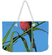 Southern Carmine Bee-eater  Weekender Tote Bag