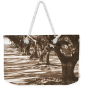 Southern Sunlight On Live Oaks Weekender Tote Bag