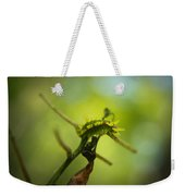 Spiny Oak Slug Moth 1 Weekender Tote Bag