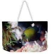 Spotted Aquarium One Fish Weekender Tote Bag