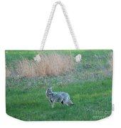 Spring Coyote  Weekender Tote Bag