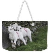Spring Lambs 2 Weekender Tote Bag