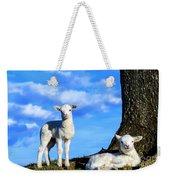 Spring Lambs Evening Light Weekender Tote Bag