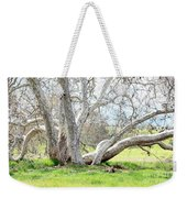 Spring Sycamore Tree Weekender Tote Bag