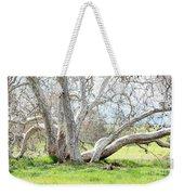 Spring Sycamore Tree Weekender Tote Bag