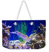 Squid In Monterey Aquarium-california Weekender Tote Bag