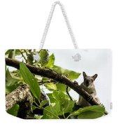 Squirrel 3 Weekender Tote Bag