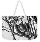 Squirrel In Low Branches Weekender Tote Bag