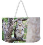 Squirrel Looking At Photographer And Waiting To Be Fed Weekender Tote Bag