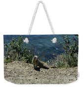 Squirrel Looking Back Over His Shoulder On The Coast Weekender Tote Bag