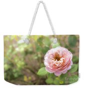 St. Cecilia Shrub Rose, Pink Rose Originally Produced By The Br Weekender Tote Bag