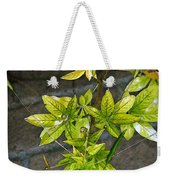 Stalk With Seed Pods Weekender Tote Bag