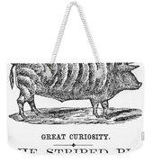 Striped Pig Curiosity Weekender Tote Bag