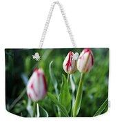 Striped Tulips In Spring Weekender Tote Bag