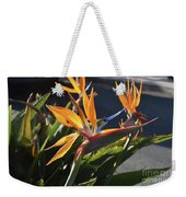 Stunning Bunch Of Flowers With Bright Orange Petals  Weekender Tote Bag