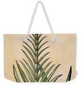 Sugar Cane, 1597 Weekender Tote Bag