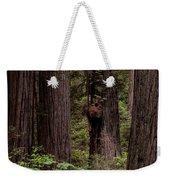 Summer In Redwood National Park Vertical Weekender Tote Bag