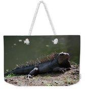 Sun Bathing Iguana Beside A Body Of Water Weekender Tote Bag