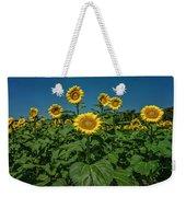 Sunflowers Weldon Spring Mo Ver1_dsc9821_16 Weekender Tote Bag