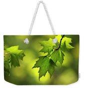 Sunlit Maple Leaves In Spring Weekender Tote Bag