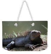 Sunning Gray Iguana Sitting Beside Water Weekender Tote Bag
