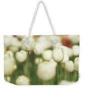 Sunsoaked Tulips #3 Weekender Tote Bag