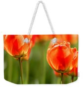 Sunsoaked Tulips #6 Weekender Tote Bag
