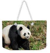 Sweet Chinese Panda Bear Sitting Down In Grass Weekender Tote Bag