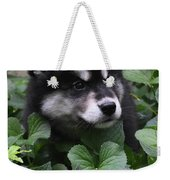 Sweet Markings On The Face Of An Alusky Puppy Dog Weekender Tote Bag