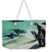 Swim Race - African Penquins Weekender Tote Bag