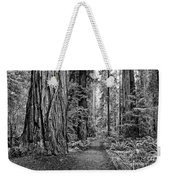 The Beautiful And Massive Giant Redwoods Weekender Tote Bag