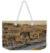 The Black Maned Lions Of The Kalahari Weekender Tote Bag