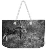 The Calm Of A Moose Bw Weekender Tote Bag