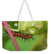 The Gulf Fritillary Caterpillar  Weekender Tote Bag