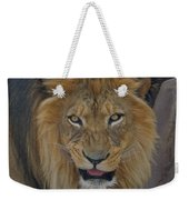 The Lion Dry Brushed Weekender Tote Bag