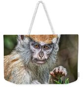 The Stare A Baby Patas Monkey  Weekender Tote Bag