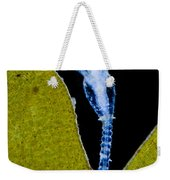 Thecate Hydrozoan Clytia Sp., Lm Weekender Tote Bag