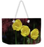 Three Blooming Yellow Tulips Of Different Heights Weekender Tote Bag