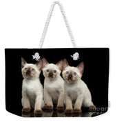 Three Kitty Of Breed Mekong Bobtail On Black Background Weekender Tote Bag by Sergey Taran