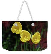 Three Pretty Blooming Yellow Tulips In A Garden Weekender Tote Bag