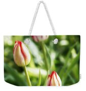 Three Striped Tulips Weekender Tote Bag
