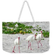 Three White Ibis Walking On The Beach Weekender Tote Bag