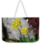Three Yellow Garden Tulips Flowering In Spring Weekender Tote Bag