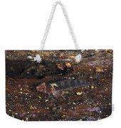 Threefin Blennie Like Fish On Log Weekender Tote Bag