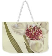 Tiger Flower   Tigridia Pavonia Alba Weekender Tote Bag
