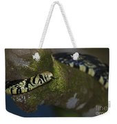 Tiger In The Tree.. Weekender Tote Bag
