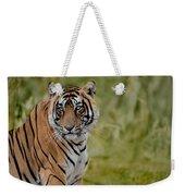 Tiger Look Weekender Tote Bag